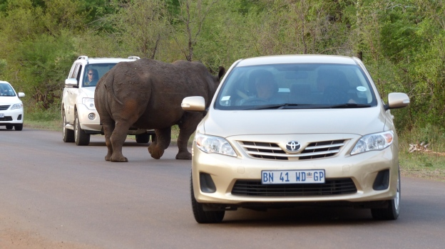 Animales y coches en Kruger NP