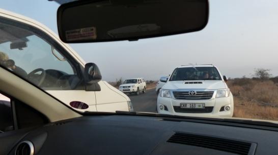 Atasco observando animales en Kruger Np